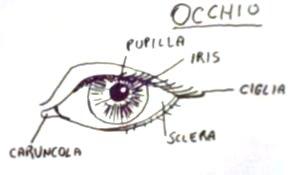 caricatura occhi
