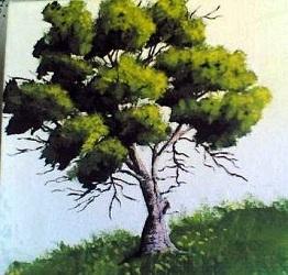 Dipingere un Albero