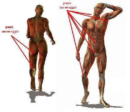 figura-umana-drappeggio-punti-ancoraggio