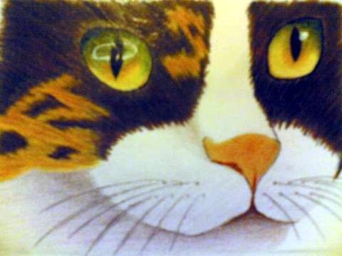 Colorare Un Gatto Con Le Matite Colorate Disegno Pittura