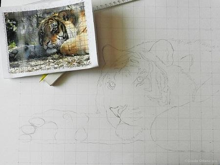 Disegno della Tigre