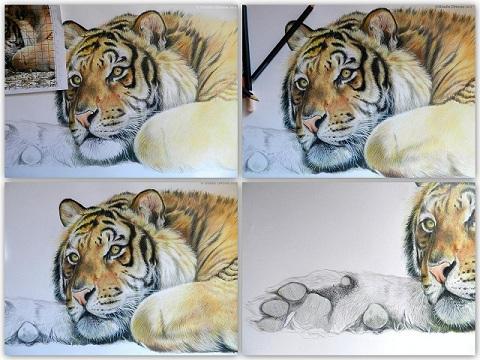 Continuo a Colorare la Tigre