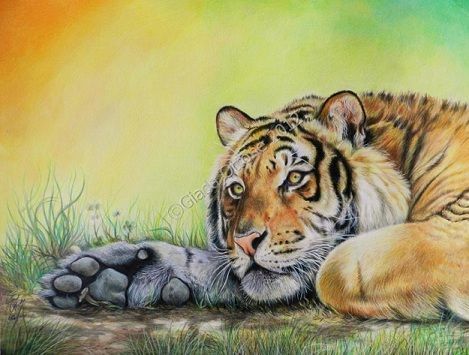 Colorare una tigre con le matite colorate disegno pittura for Disegno terra da colorare
