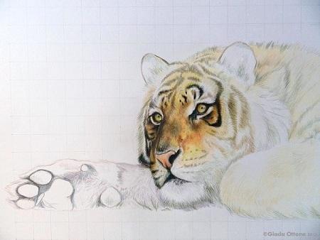 Colorare Corpo della Tigre