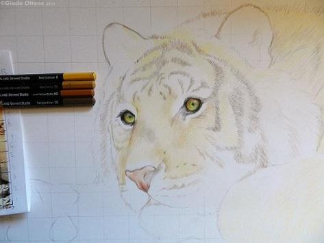 Colorare Naso della Tigre