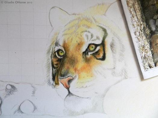 Colorare Volto della Tigre