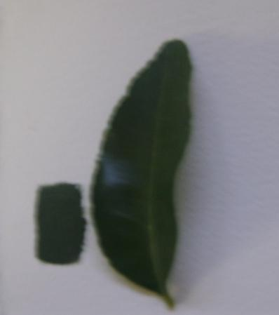 Mescolare colore verde foglia