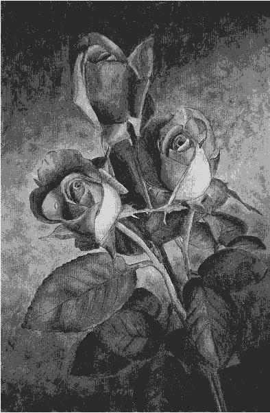 rose-fig5